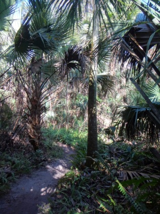 Jungle on the trails