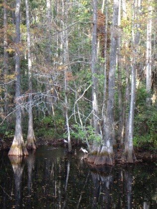 Some of the Alligator territory